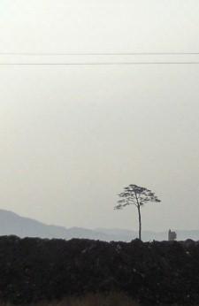 rikuzen2011101100117.jpg